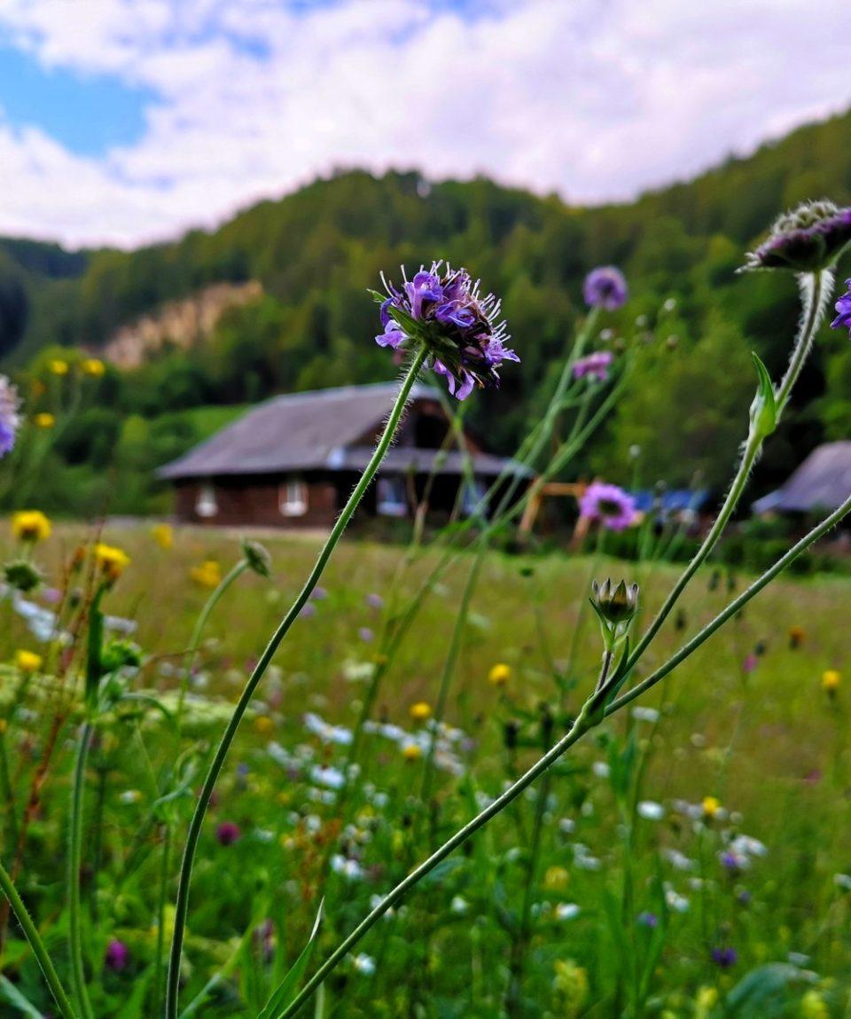 Поход в Карпаты с духовными практиками Медитация