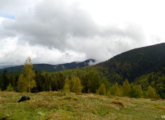 Gora Yavornik
